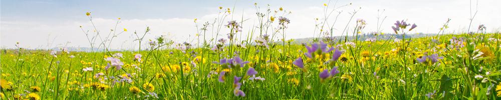 Allergie gegen Gräserpollen