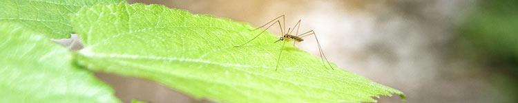 Was hilft gegen Mücken?