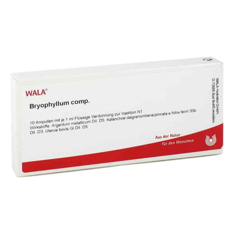 Bryophyllum Comp. Ampullen  bei apo-discounter.de bestellen