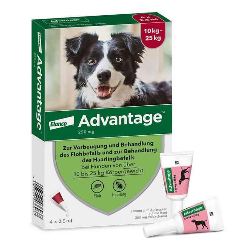 Advantage 250 für Hunde Lösung  bei apo-discounter.de bestellen