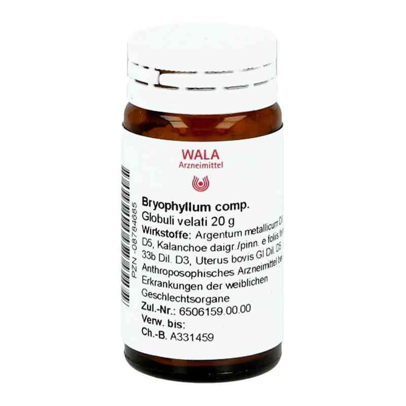 Bryophyllum Comp. Globuli  bei apo-discounter.de bestellen