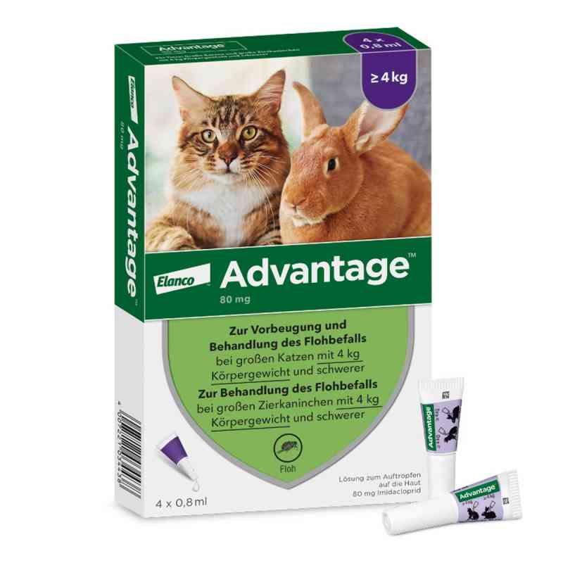 Advantage 80 mg für gr.Katzen und gr.Zierkaninchen  bei apo-discounter.de bestellen