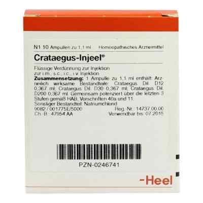 Crataegus Injeel Ampullen  bei apo-discounter.de bestellen