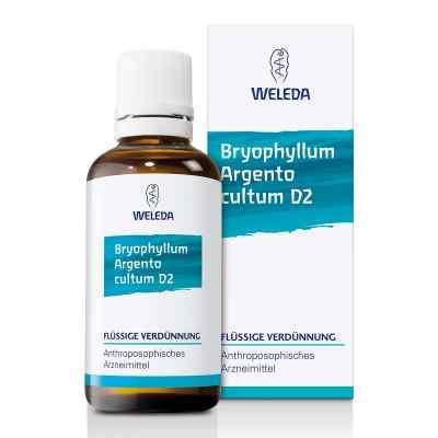 Bryophyllum Argento Cultum Dilution D2  bei apo-discounter.de bestellen