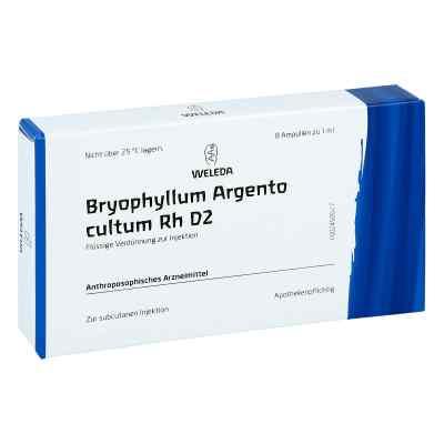 Bryophyllum Argento Cultum Rh D2 Ampullen  bei apo-discounter.de bestellen
