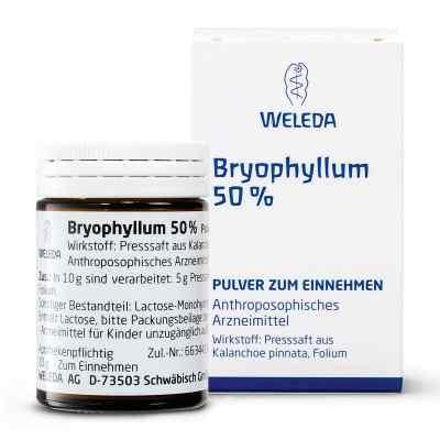 Bryophyllum 50% Pulver zum Einnehmen  bei bioapotheke.de bestellen