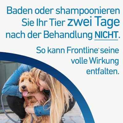 Frontline Spot on Hund 40 veterinär Lösung gegen Flöhe und Zecke  bei apo-discounter.de bestellen