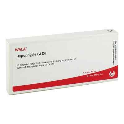Hypophysis Gl D6 Ampullen  bei apo-discounter.de bestellen