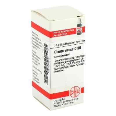 Cicuta Virosa C 30 Globuli  bei apo-discounter.de bestellen