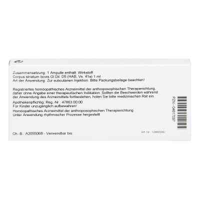 Corpus Striatum Gl D5 Ampullen  bei apo-discounter.de bestellen