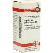 Eupatorium Purpureum C 30 Globuli  bei apo-discounter.de bestellen