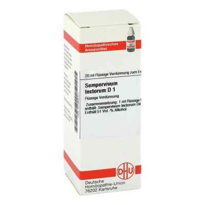 Sempervivum Tect. D1 Dilution  bei apo-discounter.de bestellen