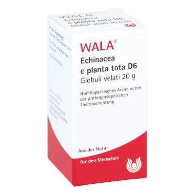 Echinacea E Planta Tota D 6 Globuli  bei apo-discounter.de bestellen