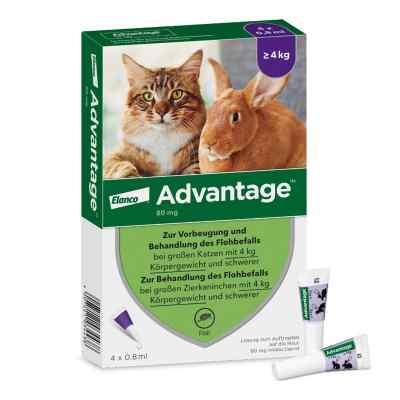 Advantage 80 mg für gr.Katzen und gr.Zierkaninchen  bei bioapotheke.de bestellen