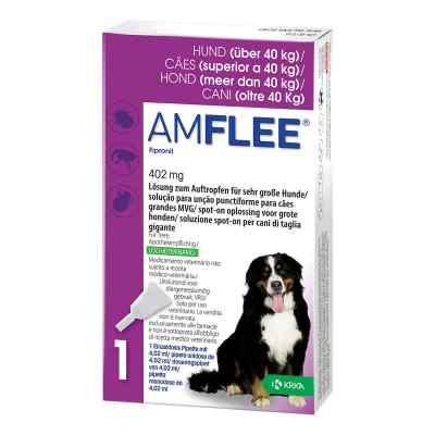 Amflee 402 mg Lösung zur, zum Auftropfen für sehr gr.Hunde  bei apo-discounter.de bestellen