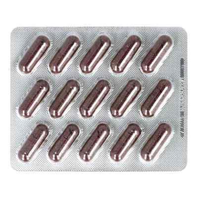 Cranberry Extrakt 300 mg Kapseln  bei apo-discounter.de bestellen