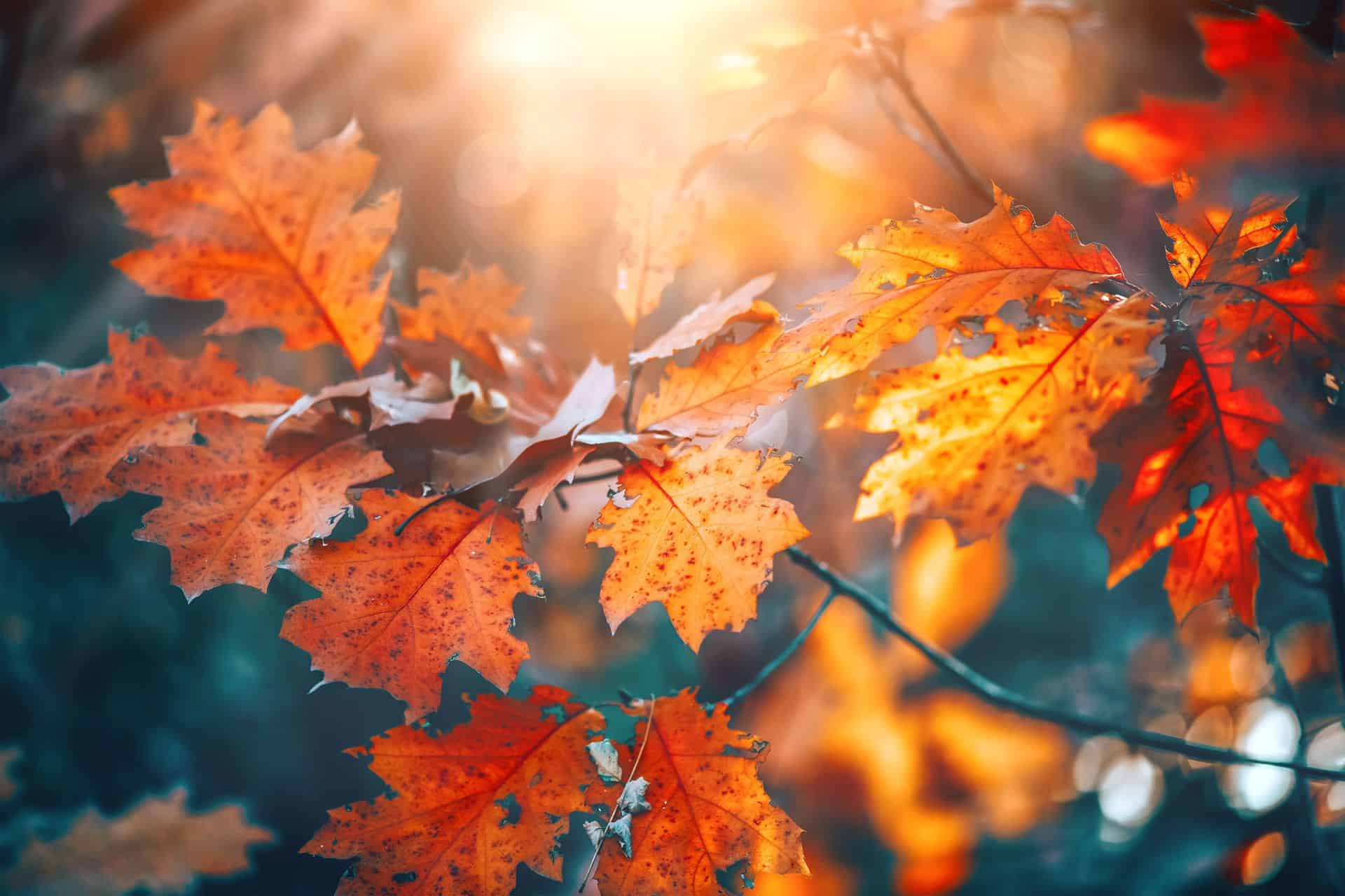 Fit im Herbst